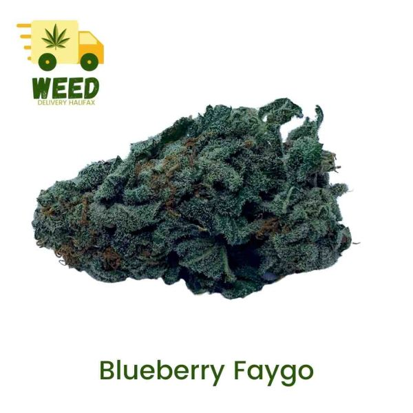 Blueberry Faygo - Weed Delivery Halifax - WDH