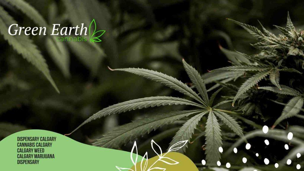 Calgary Dispensary - Green Earth Cannabis